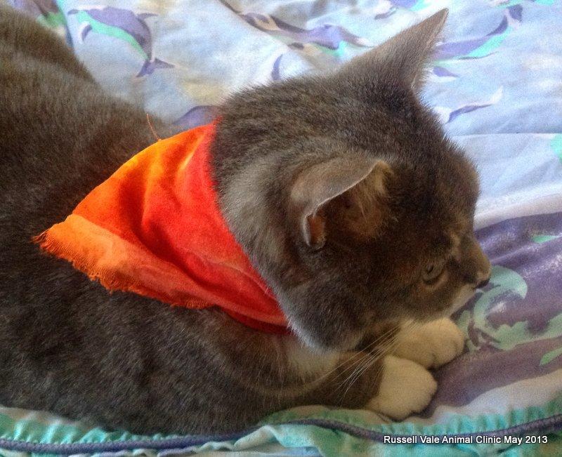 pusski in orange
