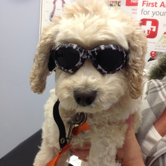 Who could resist this cool dude. Meet Ralph who has doggles to protect his eyes.