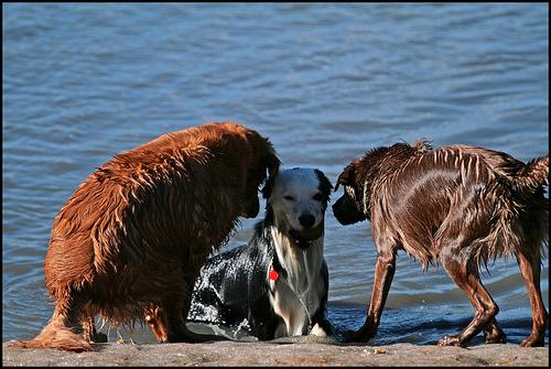 pushy dogs