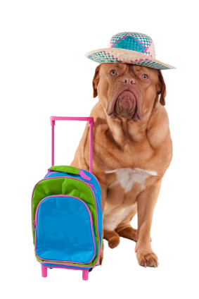 Pet Travel Safelty