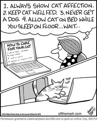 Cat rules