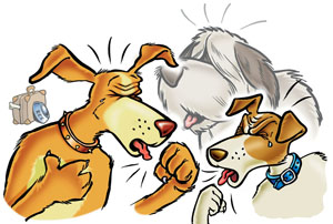 dog cough
