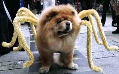 spider chow