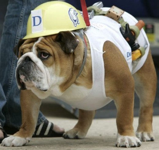 bulldog worker