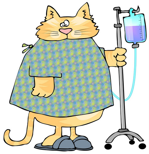 cat sq fluids