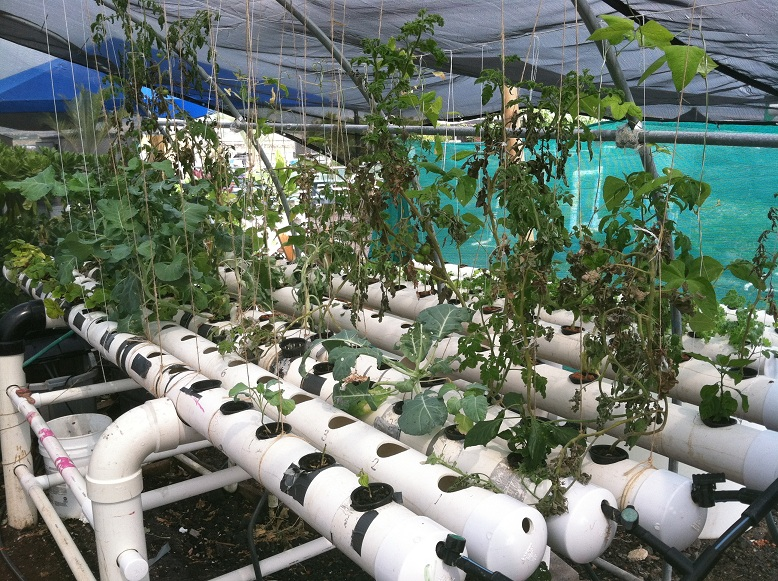 WHEA hydroponics