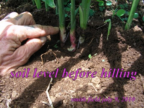 Soil Levels Before First Hilling
