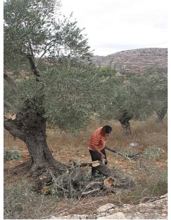 olivier coupé