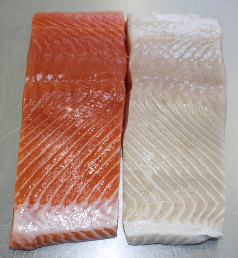 Ivory Salmon