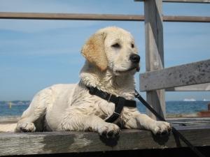 Watch Puppy
