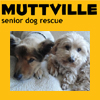 Muttville Senior Rescue