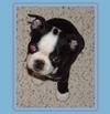 Butch Puppy