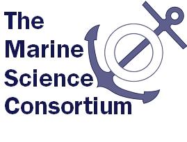 MSC Shirt Logo