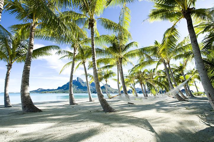 palmtree_hammock.jpg