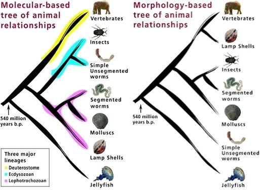 Morph-Molecular