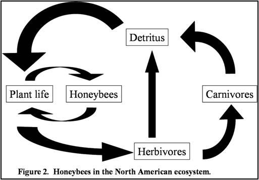 Ecosystem.BeesPlus