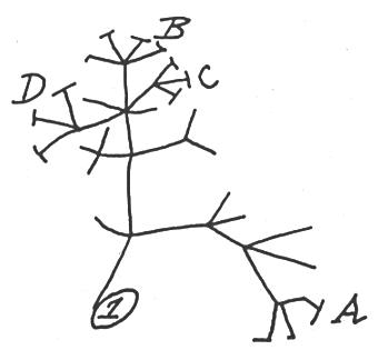 Darwins.Tree.of.Life