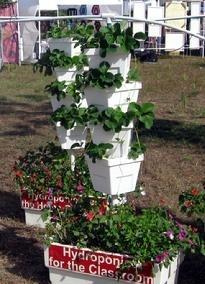 hydroponics_photo