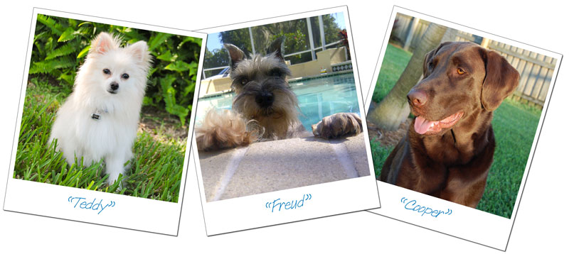 Photos of Pets