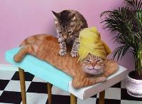 Kitty Massage2