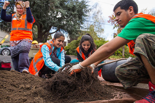 Tree Planting Fun