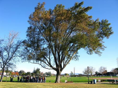 Greer Park 2