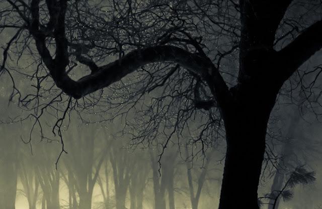 tree hanh nguyen