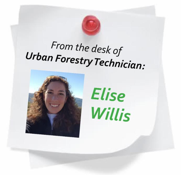 From the desk of Urban Forestry Technician Elise Willis
