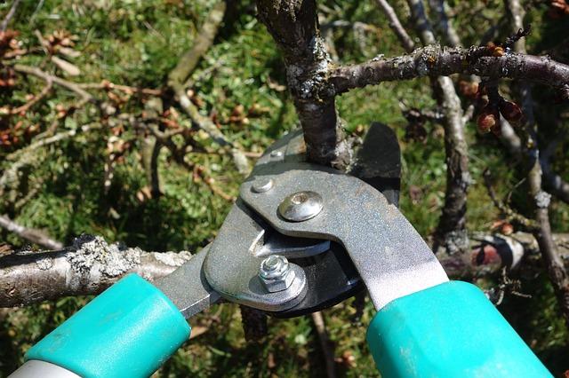 Pruning - Taller de arboles