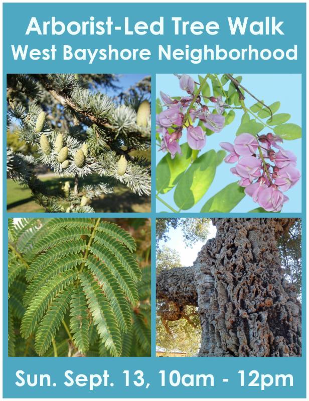 August Tree Walk - Best Bayshore