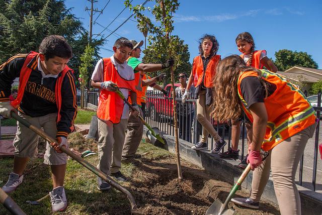 Neighborhood tree planting volunteers