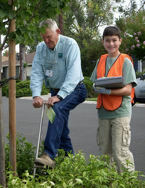 Young Tree Care Survey