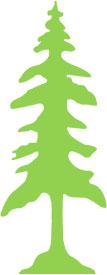 Stanford Tree Talk