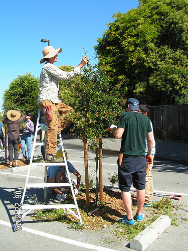 Costano pruning