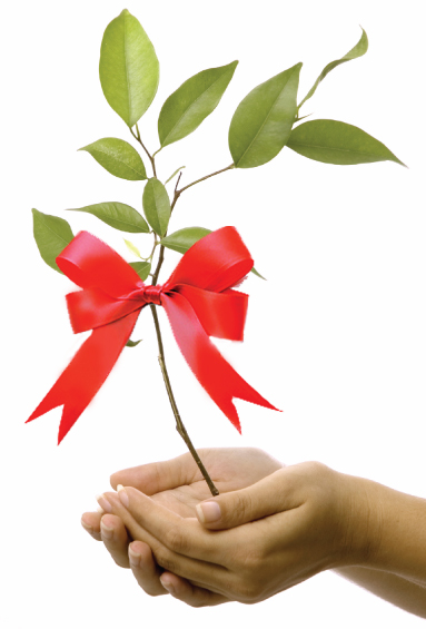 Learn more about Tree Gifts