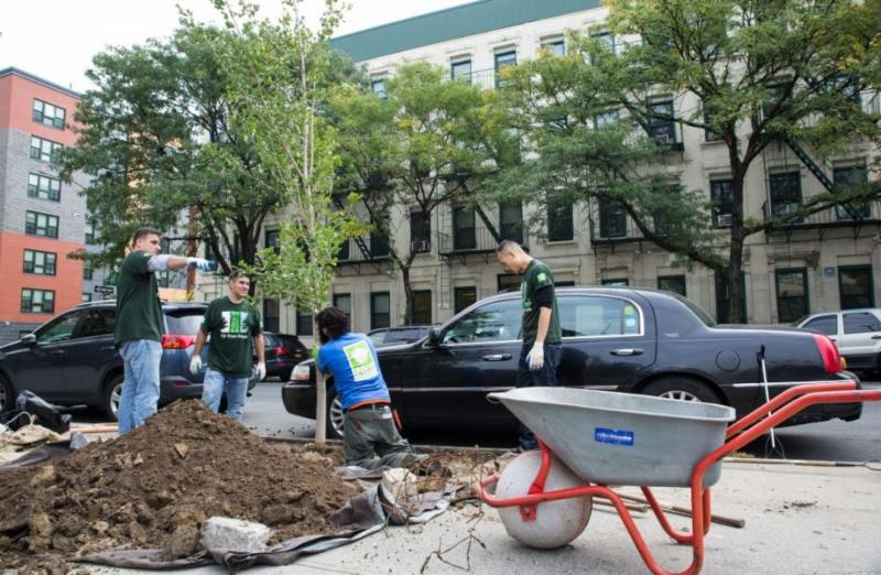 New York just hit a huge tree-planting milestone