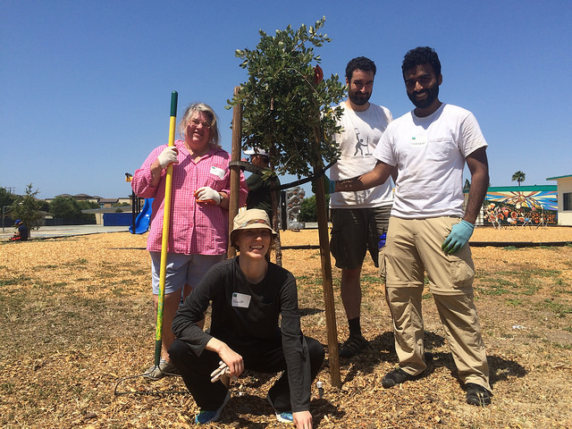 Tree care fun