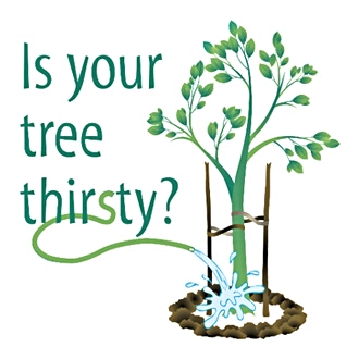 Is Your Tree thirsty?