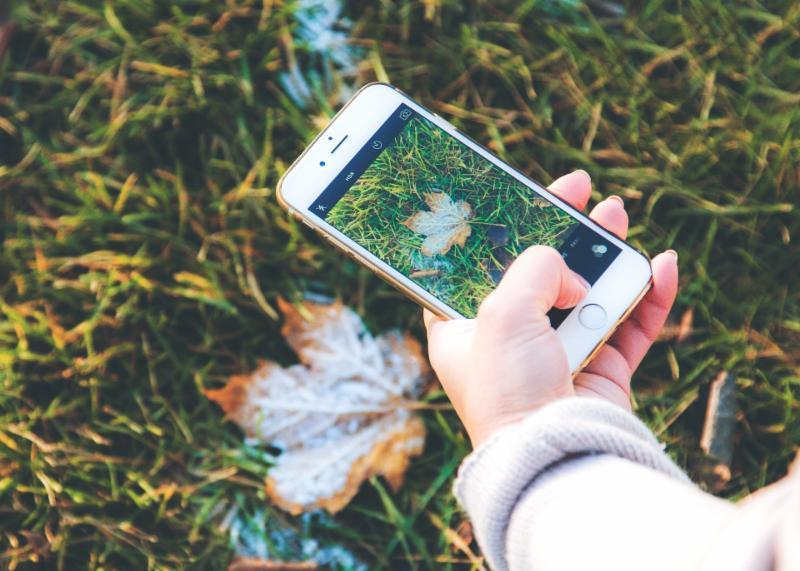 Take some nature photos