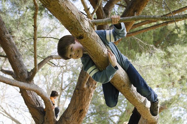 Healthy Trees, Healthy Kids