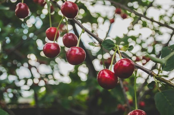 Mmm...cherries_