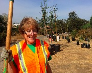 Bol Park Bike Path Tree Planting