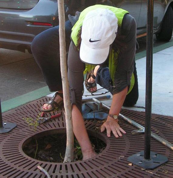 Tree care survey volunteer