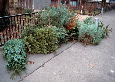 old christmas trees
