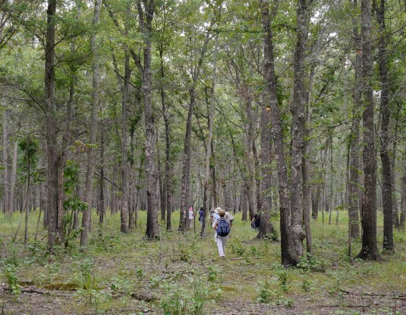 Oak barrens adjacent to the May Prairie