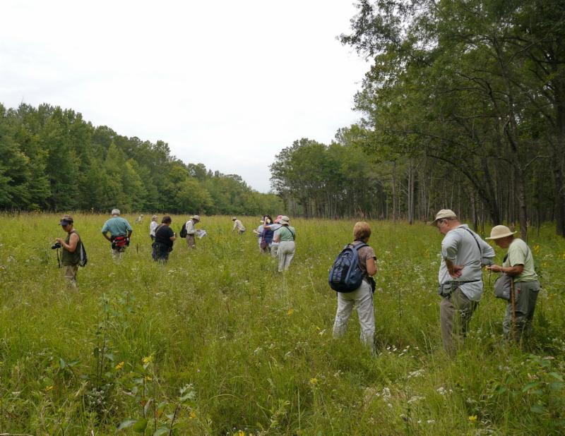 Spreading out to photograph and study the Prairie's plants