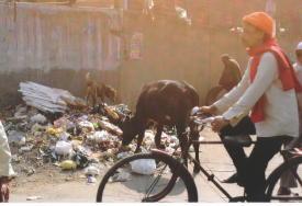Natasha in India at the dump