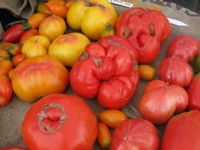 Tomatoes at NFMA
