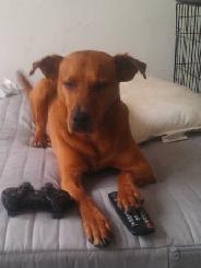 Karl w/ remote control