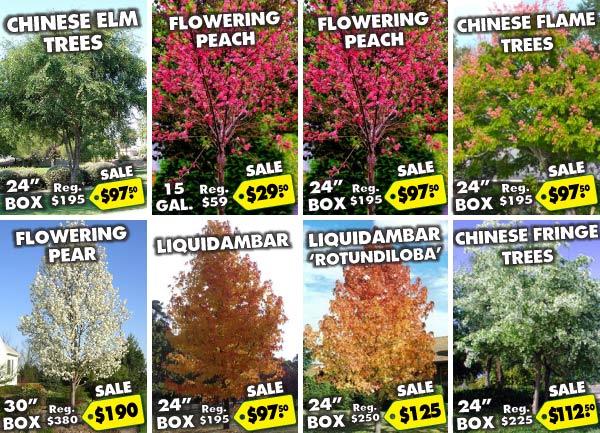 Summer 2016 Sale Trees